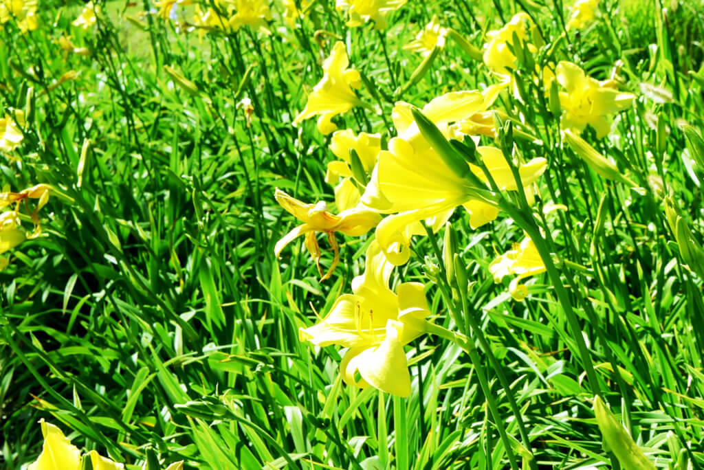 green-and-yellow-flowers-in-torrance_2020