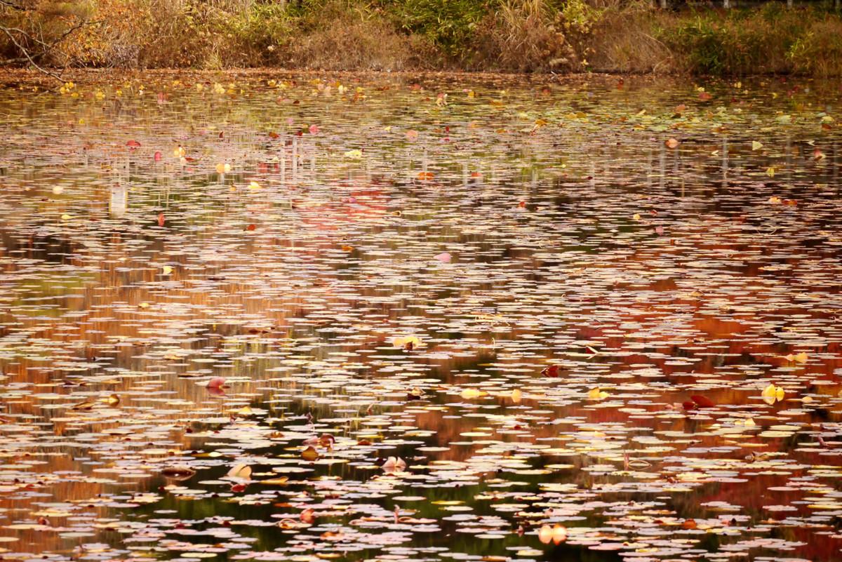 Big pond gokurakuji in Hiroshima