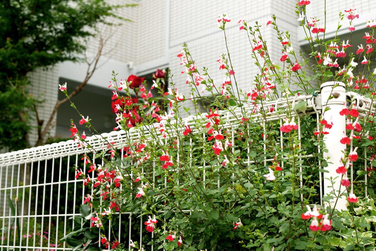 Flowers on the roadside in Hiroshima Japan