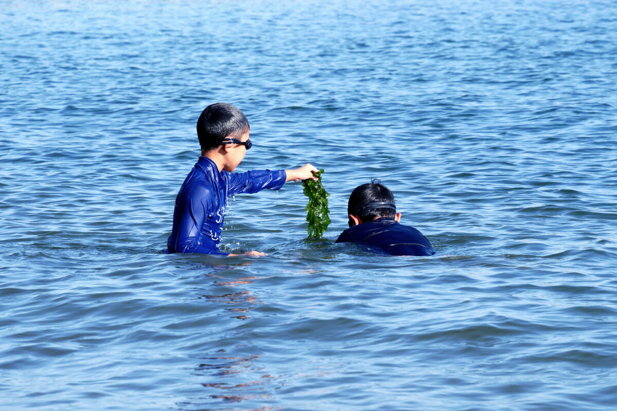 A Kid has a sea weed, children in the sea