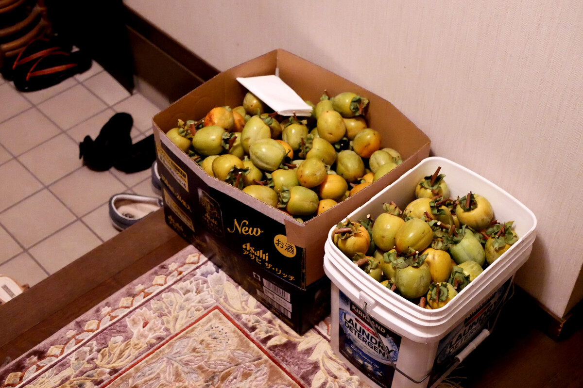 Persimmons in the boxes at the Japanese house's entrance